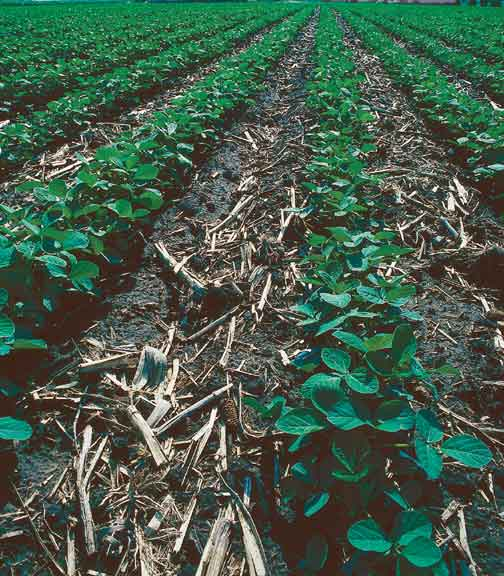 the importance of crop residue in agricultural conservation Conservation farming (cf) more recently referred to as conservation   permanent soil cover with live or dead plant material (eg crop residues), and  crop  this is undoubtedly an extremely important aspect of cf and most farmers  are.